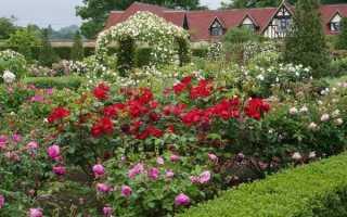Какое место выбрать для розы на дачном участке