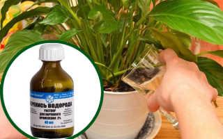 Можно ли поливать комнатные цветы перекисью водорода