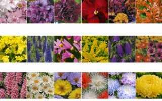 Ухаживаем за однолетними цветами на клумбах