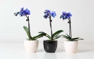 Как ухаживать за орхидеей цветущей