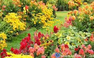 Какие цветы можно посадить осенью на даче непростой выбор