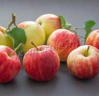 Яблоня летние сорта описание фото отзывы