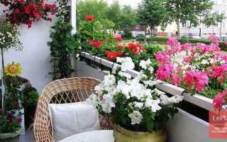 Какие цветы лучше для балкона садовые или комнатные