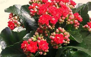 Какие цветы цветут зимой