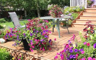 Цветыоднолетники для сада или как сделать участок неотразимым