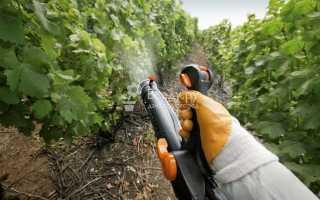 Чем обработать виноград от вредителей и болезней