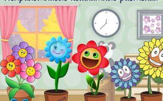 Непривередливые комнатные растения