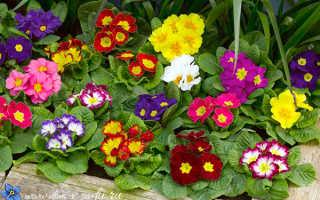 Какие цветы посадить в тени за домом