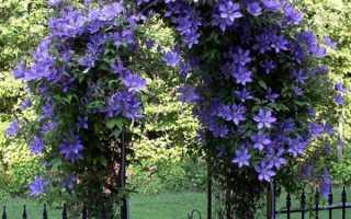 Вьющиеся цветы на даче