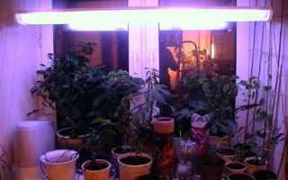 Освещение для комнатных растений правильный световой режим