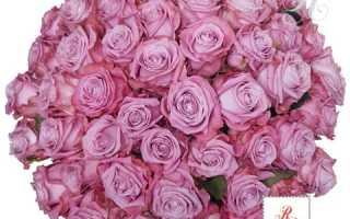 Какие розы мы предлагаем