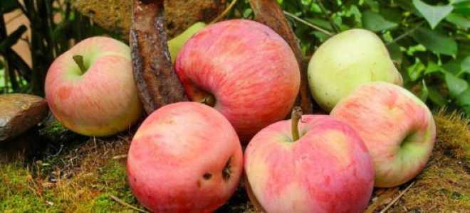 Сласть алая яблоня описание фото