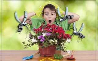 Мошки в комнатных цветах как избавиться в домашних