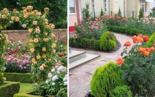 Как красиво посадить розы