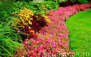 Какие цветы посадить на газоне