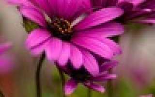 Для тех кто любит цветы
