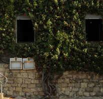 Как обрезать виноград детальная схема обрезки винограда