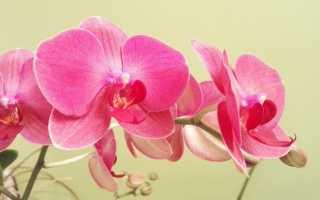 Категории орхидей какие бывают комнатные виды с фото