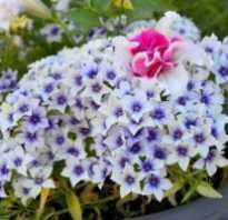 Какие самые красивые низкорослые цветы