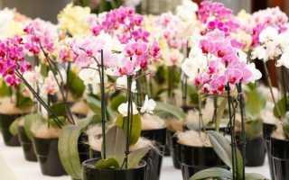 Основные причины для пересадки орхидеи