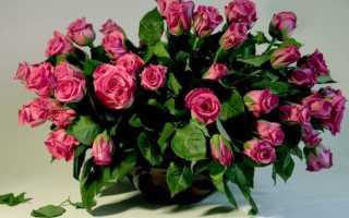 Как вырастить розу из букета в домашних условиях