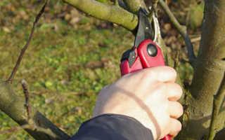 Профессиональная обрезка яблонь