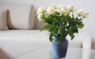 Аспирин в цветы розы