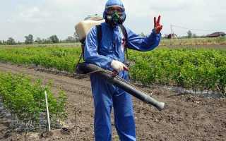 Чем обработать виноград от грибковых заболеваний