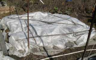 Укрытие теплолюбивых лиан и кустарников