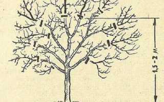 Время обрезки груши осенью
