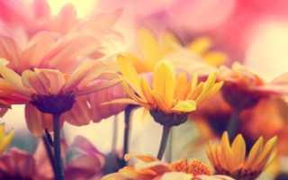 Какие цветы можно посеять под зиму