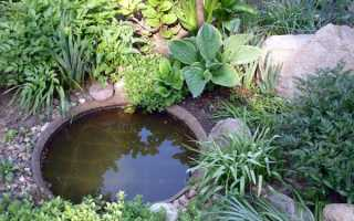 Хосты в соседстве с другими растениями