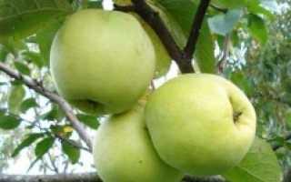 Сорт яблок на букву д