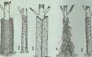 Как укрыть деревья от мороза