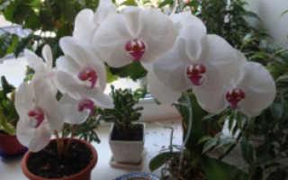 Можно ли держать у себя дома орхидею
