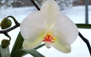 Орхидеи как ухаживать зимой