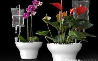Как сделать капельный полив для комнатных растений своими руками