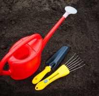 Как посадить крокусы в саду