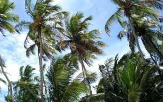Крупные виды и пальмы