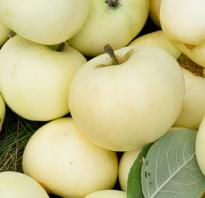 Лучшие сорта красных яблок