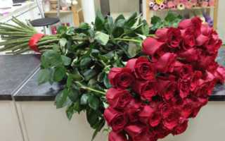 Как называются розы на длинной ножке