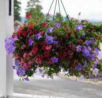 Какие бывают цветы для выращивания в кашпо