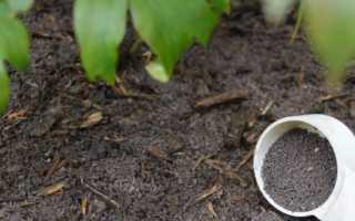 Как ухаживать за древовидным пионом осенью