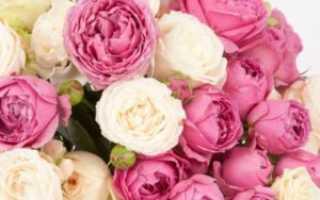 Как ухаживать за пионовидной розой и выращивание