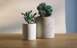 Можно ли пересаживать комнатные растения осенью