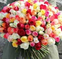 Бирюзовые розы фото