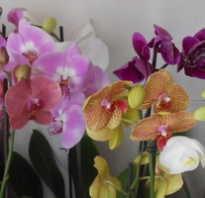 Как разобраться в названиях орхидей на этикетках