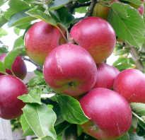 Яблоня удобрения подкормка