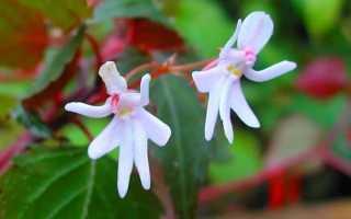 Архив метки редкие цветы