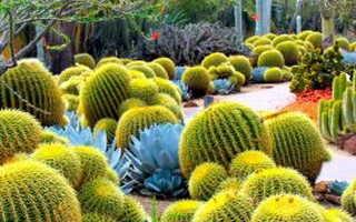 Кактусы и суккуленты в природе